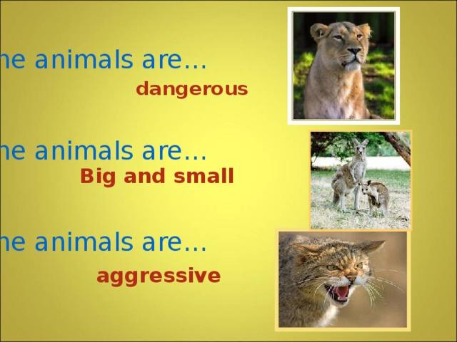 Some animals are…    Some animals are…    Some animals are… dangerous Big and small  aggressive