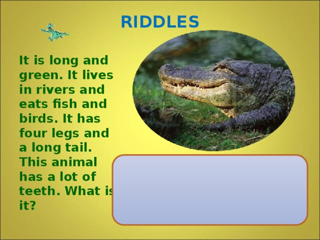 RIDDLES It is long and green. It lives in rivers and eats fish and birds. It has four legs and a long tail. This animal has a lot of teeth. What is it?