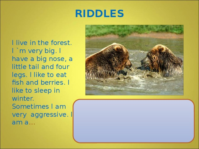 RIDDLES I live in the forest. I `m very big. I have a big nose, a little tail and four legs. I like to eat fish and berries. I like to sleep in winter. Sometimes I am very aggressive. I am a …