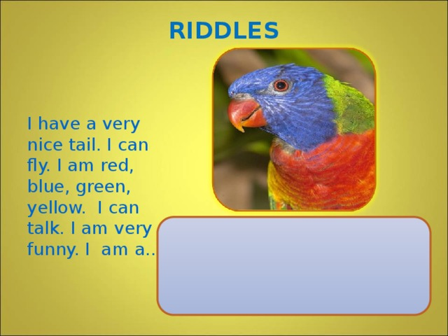 RIDDLES I have a very nice tail. I can fly. I am red, blue, green, yellow. I can talk. I am very funny. I am a..