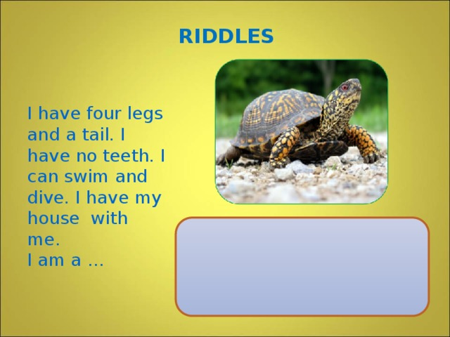 RIDDLES I have four legs and a tail. I have no teeth. I can swim and dive. I have my house with me. I am a …