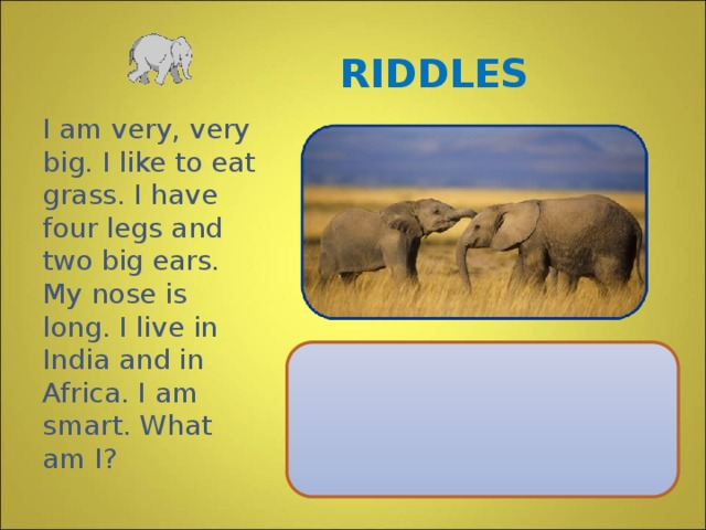 RIDDLES I am very, very big. I like to eat grass. I have four legs and two big ears. My nose is long. I live in India and in Africa. I am smart. What am I?