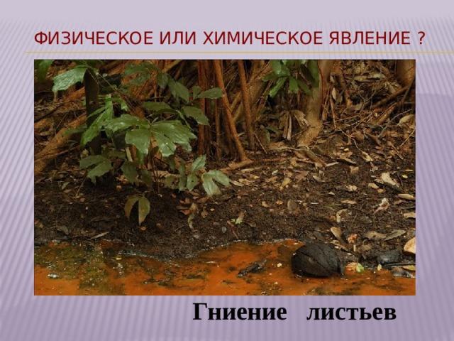 Физическое или химическое явление ? Гниение листьев