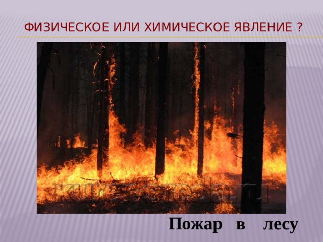 Физическое или химическое явление ?  Пожар в лесу