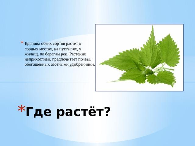 Крапива обеих сортов растет в сорных местах, на пустырях, у жилищ, по берегам рек. Растение неприхотливо, предпочитает почвы, обогащенных азотными удобрениями. Где растёт?