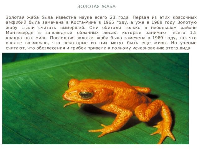 Золотая жаба Золотая жаба была известна науке всего 23 года. Первая из этих красочных амфибий была замечена в Коста-Рике в 1966 году, а уже в 1989 году Золотую жабу стали считать вымершей. Они обитали только в небольшом районе Монтеверде в заповедных облачных лесах, которые занимают всего 1,5 квадратных миль. Последняя золотая жаба была замечена в 1989 году, так что вполне возможно, что некоторые из них могут быть еще живы. Но ученые считают, что обезлесения и грибок привели к полному исчезновению этого вида.