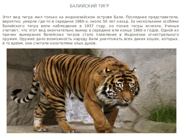 Балийский тигр Этот вид тигра жил только на индонезийском острове Бали. Последние представители, вероятно, умерли где-то в середине 1960-х, около 50 лет назад. За несколькими особями балийского тигра вели наблюдение в 1937 году, но позже тигры исчезли. Ученые считают, что этот вид окончательно вымер в середине или конце 1960-х годов. Одной из причин вымирания балийских тигров стало появление в Индонезии огнестрельного оружия. Оружие дало возможность народу Бали уничтожать всех диких кошек, которых, в то время, они считали носителями злых духов.