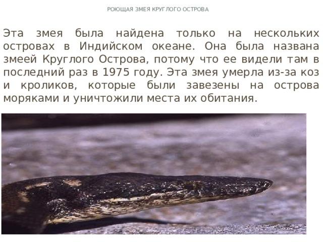 Роющая змея Круглого острова Эта змея была найдена только на нескольких островах в Индийском океане. Она была названа змеей Круглого Острова, потому что ее видели там в последний раз в 1975 году. Эта змея умерла из-за коз и кроликов, которые были завезены на острова моряками и уничтожили места их обитания.