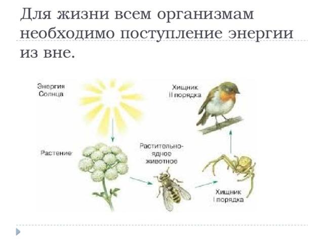 Для жизни всем организмам необходимо поступление энергии из вне.
