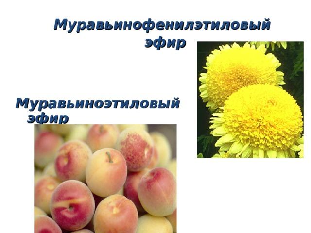 Муравьинофенилэтиловый  эфир Муравьиноэтиловый эфир