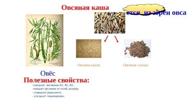 Овсяная каша получается из зёрен овса Овсяная крупа Овсяные хлопья Овёс Полезные свойства: - содержит витамины B1, В2, В3; -очищает организм от солей, шлаков; - повышает иммунитет, - улучшает пищеварение.