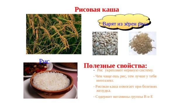 Рисовая каша Варят из зёрен риса Рис Полезные свойства: - Рис укрепляют нервную систему. - Чем чаще ешь рис, тем лучше у тебя интеллект. - Рисовая каша помогает при болезнях желудка. - Содержит витамины группы В и Е