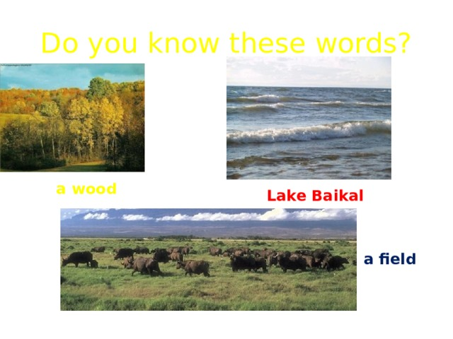 Do you know these words? a wood Lake Baikal a field