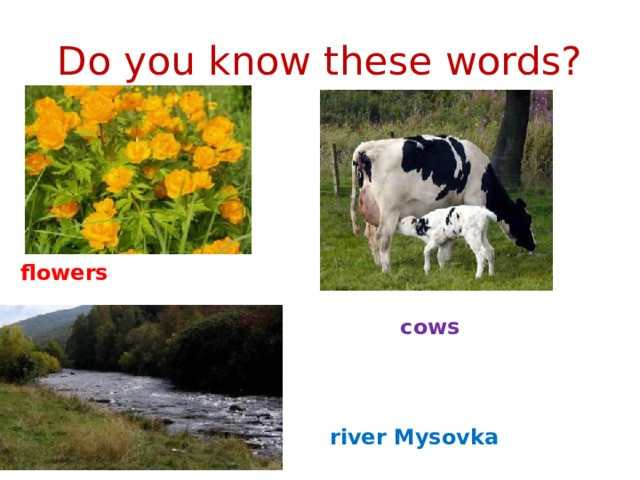 Do you know these words? flowers cows river Mysovka