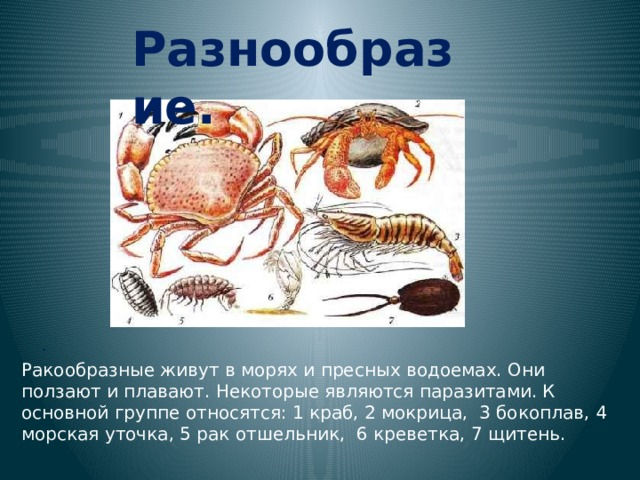 Разнообразие. . Ракообразные живут в морях и пресных водоемах. Они ползают и плавают. Некоторые являются паразитами. К основной группе относятся: 1 краб, 2 мокрица, 3 бокоплав, 4 морская уточка, 5 рак отшельник, 6 креветка, 7 щитень.