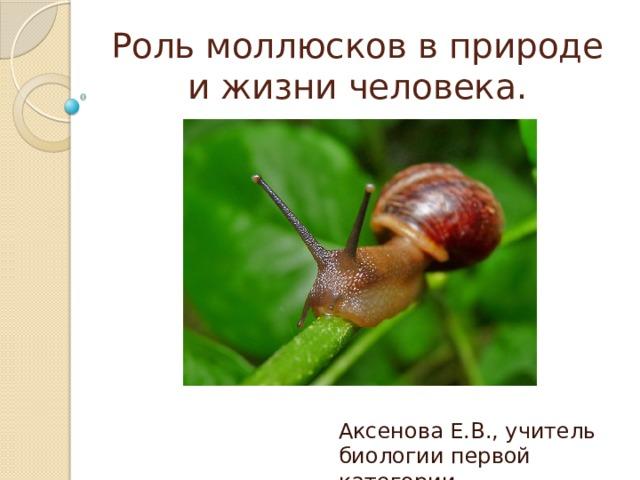 Роль моллюсков в природе и жизни человека. Аксенова Е.В., учитель биологии первой категории