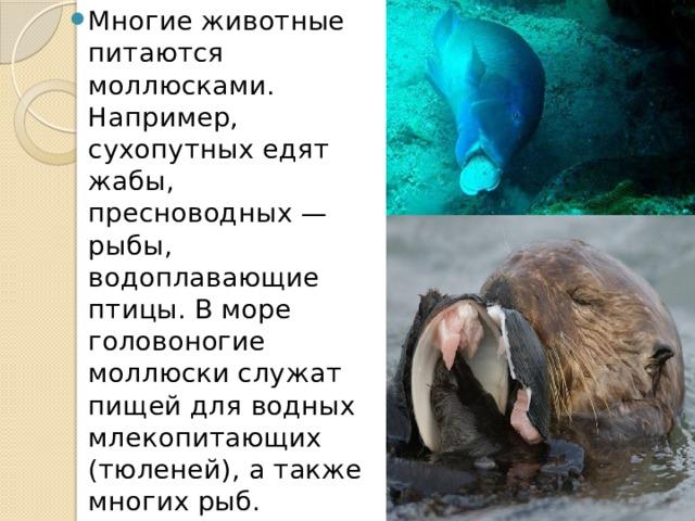 Многие животные питаются моллюсками. Например, сухопутных едят жабы, пресноводных — рыбы, водоплавающие птицы. В море головоногие моллюски служат пищей для водных млекопитающих (тюленей), а также многих рыб.