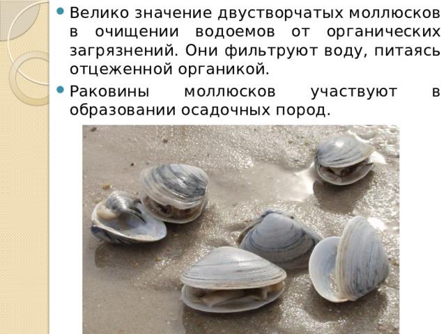 Велико значение двустворчатых моллюсков в очищении водоемов от органических загрязнений. Они фильтруют воду, питаясь отцеженной органикой. Раковины моллюсков участвуют в образовании осадочных пород.