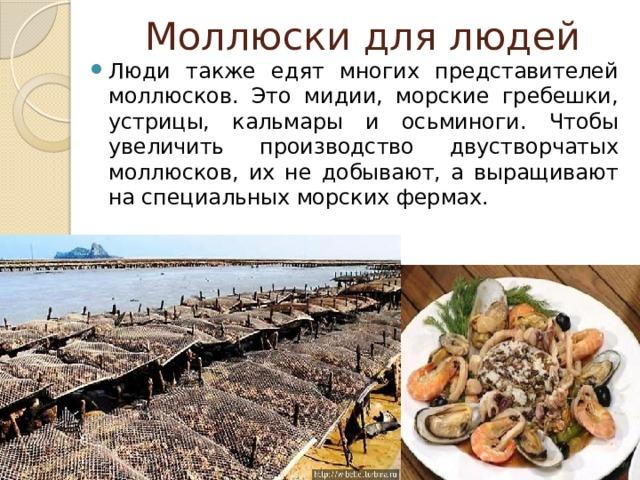 Моллюски для людей Люди также едят многих представителей моллюсков. Это мидии, морские гребешки, устрицы, кальмары и осьминоги. Чтобы увеличить производство двустворчатых моллюсков, их не добывают, а выращивают на специальных морских фермах.