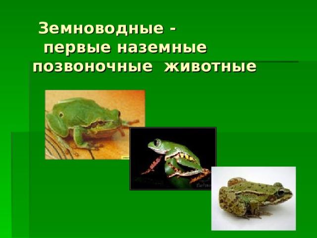 Земноводные -  первые наземные позвоночные животные
