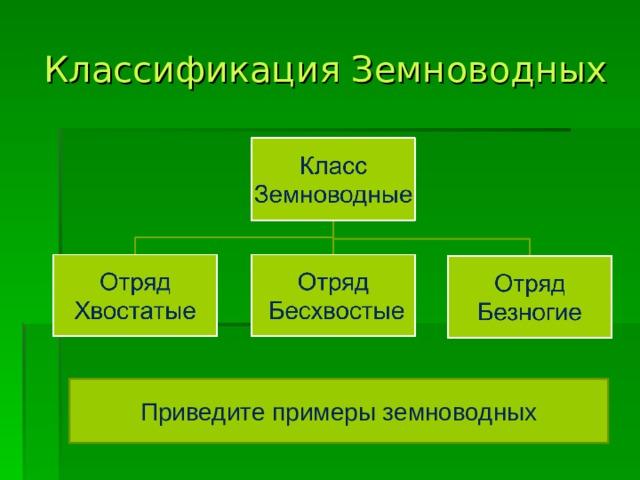 Классификация Земноводных Приведите примеры земноводных