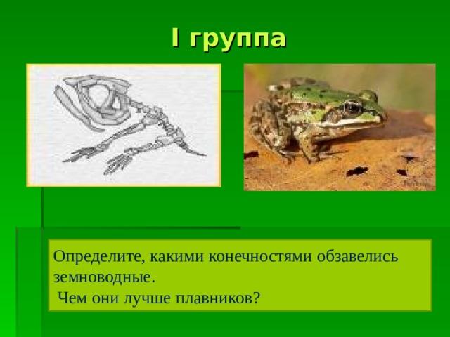 I  группа Определите, какими конечностями обзавелись земноводные.  Чем они лучше плавников?
