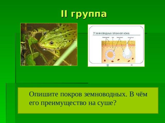 II группа Опишите покров земноводных. В чём его преимущество на суше?