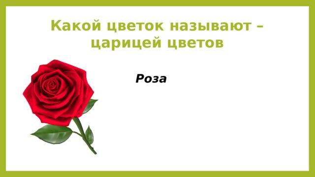 Какой цветок называют – царицей цветов Роза