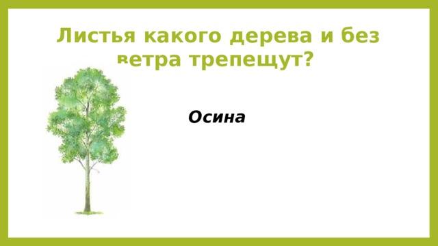 Листья какого дерева и без ветра трепещут?  Осина