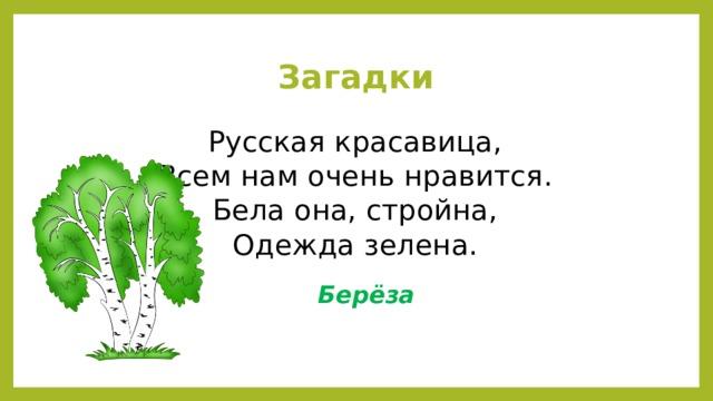 Загадки Русская красавица,  Всем нам очень нравится.  Бела она, стройна,  Одежда зелена. Берёза