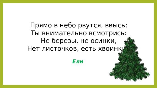 Прямо в небо рвутся, ввысь;  Ты внимательно всмотрись:  Не березы, не осинки,  Нет листочков, есть хвоинки. Ели