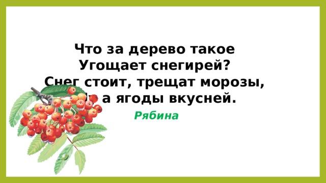 Что за дерево такое  Угощает снегирей?  Снег стоит, трещат морозы,  Ну а ягоды вкусней. Рябина