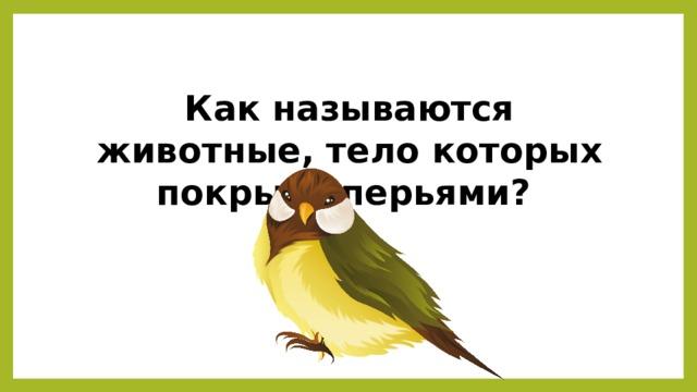 Как называются животные, тело которых покрыто перьями?