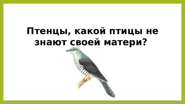 Птенцы, какой птицы не знают своей матери?