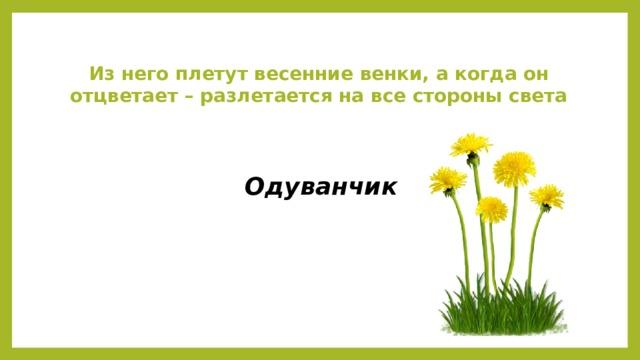 Из него плетут весенние венки, а когда он отцветает – разлетается на все стороны света Одуванчик