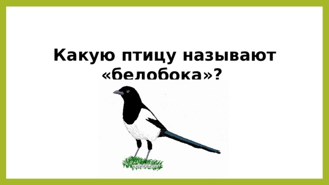 Какую птицу называют «белобока»?