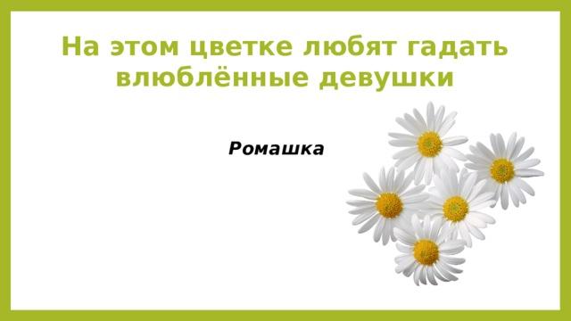 На этом цветке любят гадать влюблённые девушки Ромашка