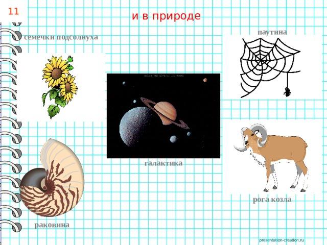 11 и в природе паутина семечки подсолнуха галактика рога козла раковина