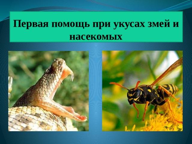 Первая помощь при укусах змей и насекомых