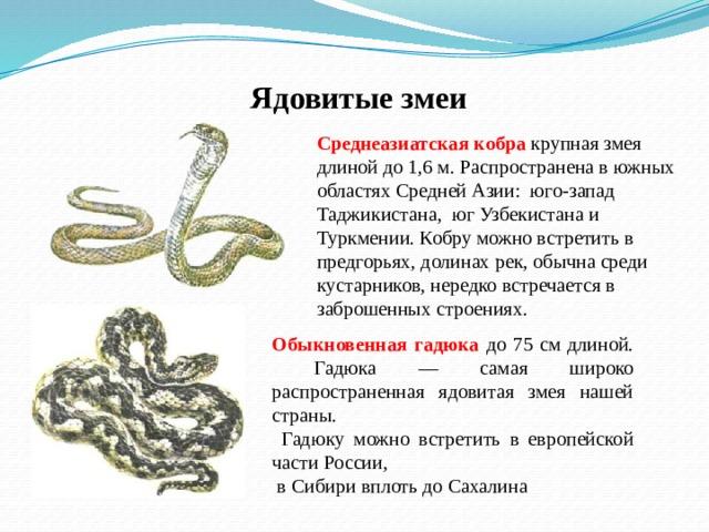 Ядовитые змеи Среднеазиатская кобра крупная змея длиной до 1,6 м. Распространена в южных областях Средней Азии: юго-запад Таджикистана, юг Узбекистана и Туркмении. Кобру можно встретить в предгорьях, долинах рек, обычна среди кустарников, нередко встречается в  заброшенных строениях. Обыкновенная гадюка до 75 см длиной.  Гадюка — самая широко распространенная ядовитая змея нашей страны.  Гадюку можно встретить в европейской части России,  в Сибири вплоть до Сахалина