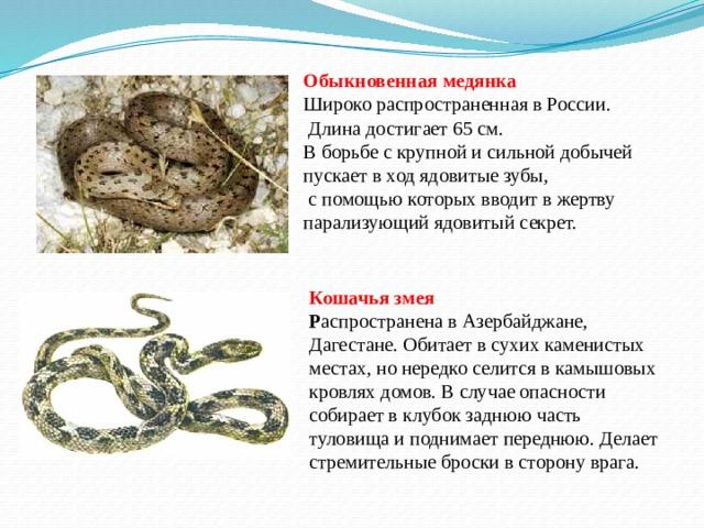 Обыкновенная медянка  Широко распространенная в России.  Длина достигает 65 см. В борьбе с крупной и сильной добычей пускает в ход ядовитые зубы,  с помощью которых вводит в жертву парализующий ядовитый секрет. Кошачья змея  Р аспространена в Азербайджане, Дагестане. Обитает в сухих каменистых местах, но нередко селится в камышовых кровлях домов. В случае опасности собирает в клубок заднюю часть туловища и поднимает переднюю. Делает стремительные броски в сторону врага.
