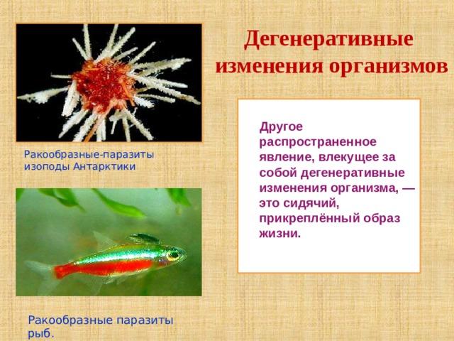 Дегенеративные изменения организмов  Другое распространенное явление, влекущее за собой дегенеративные изменения организма, — это сидячий, прикреплённый образ жизни.  Ракообразные-паразиты изоподы Антарктики Ракообразные паразиты рыб.