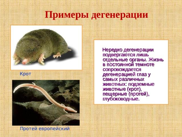 Примеры дегенерации  Нередко дегенерации подвергаются лишь отдельные органы. Жизнь в постоянной темноте сопровождается дегенерацией глаз у самых различных животных: подземные животные (крот), пещерные (протей), глубоководные. Крот  Протей европейский