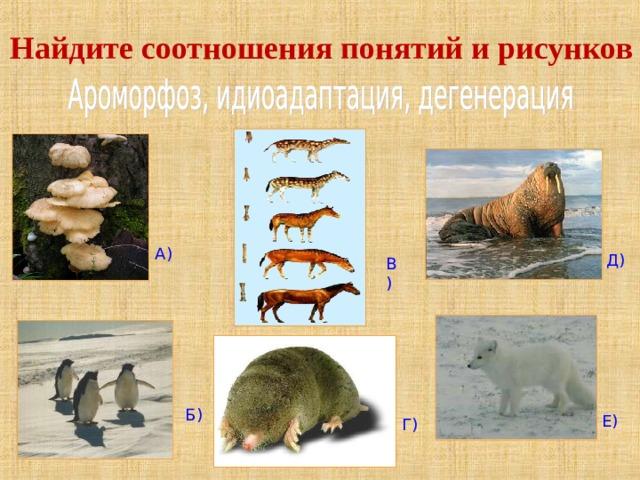 Найдите соотношения понятий и рисунков А) Д) В) Б) Е) Г)