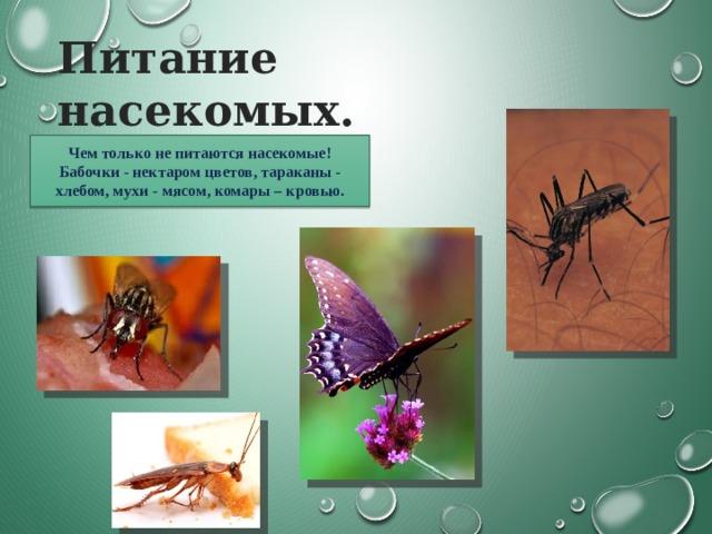 Питание насекомых. Чем только не питаются насекомые! Бабочки - нектаром цветов, тараканы - хлебом, мухи - мясом, комары – кровью.
