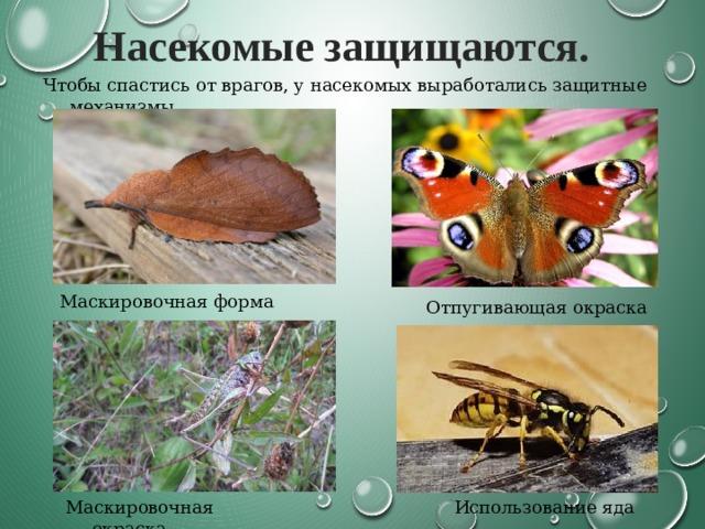 Насекомые защищаются. Чтобы спастись от врагов, у насекомых выработались защитные механизмы Маскировочная форма Отпугивающая окраска Маскировочная окраска Использование яда