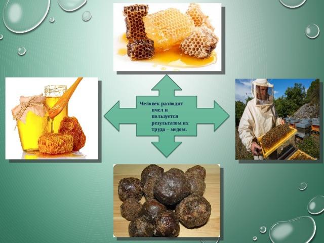 Человек разводит пчел и пользуется результатом их труда – медом.