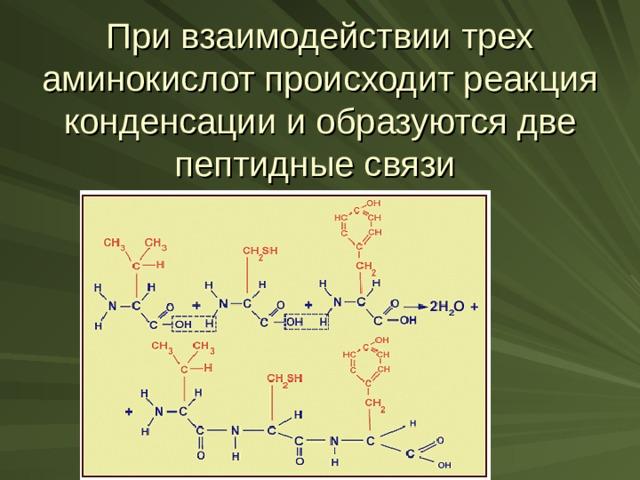 При взаимодействии трех аминокислот происходит реакция конденсации и образуются две пептидные связи