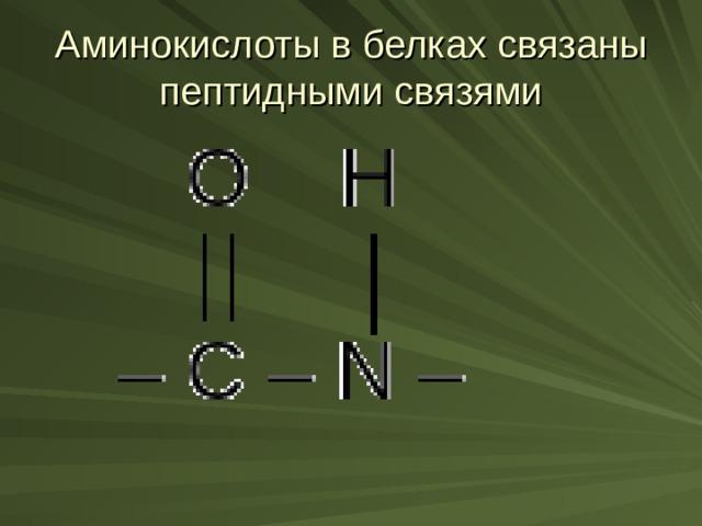 Аминокислоты в белках связаны пептидными связями