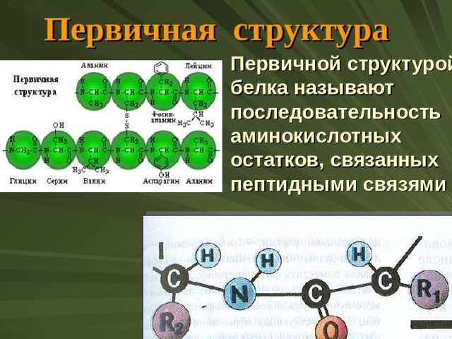 Первичная структура Первичной структурой  белка называют последовательность аминокислотных остатков, связанных пептидными связями